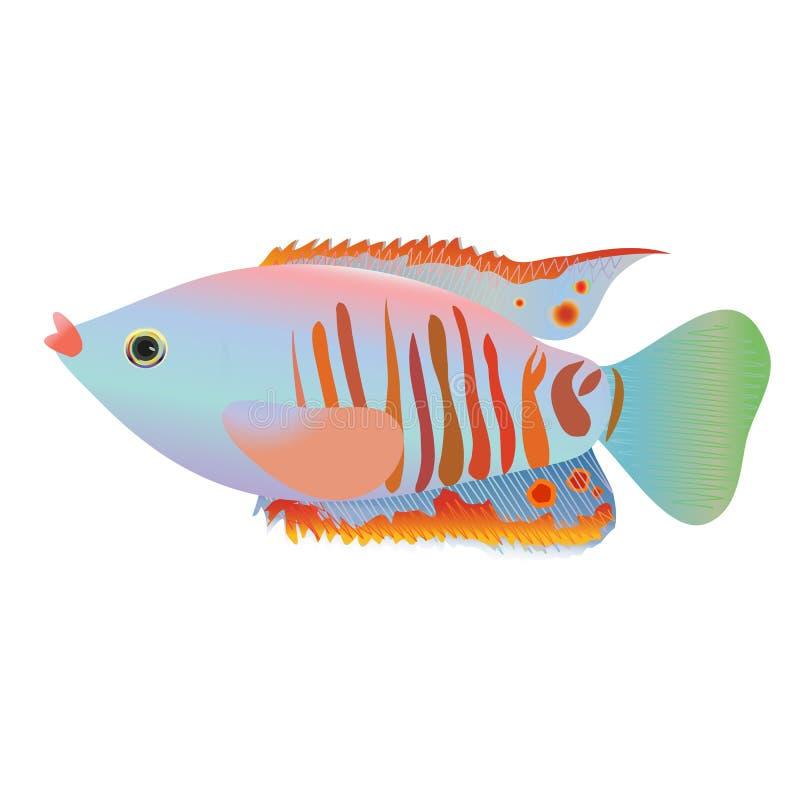 在白色背景隔绝的神仙的动画片鱼 向量例证