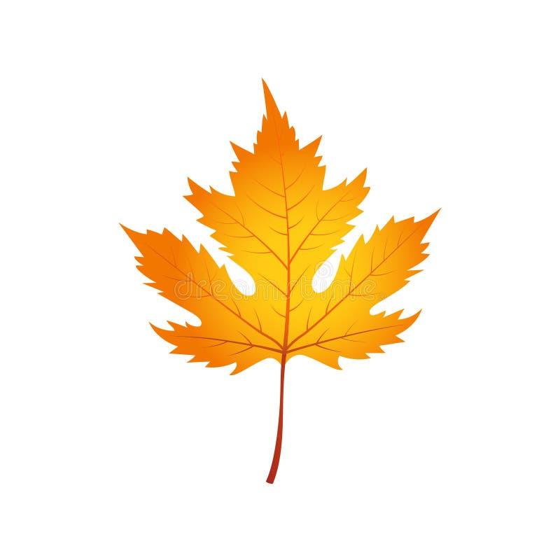 在白色背景隔绝的秋天枫叶 向量例证