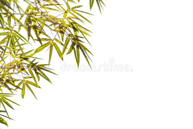 在白色背景隔绝的竹叶子,文件包含与裁减路线 免版税库存图片