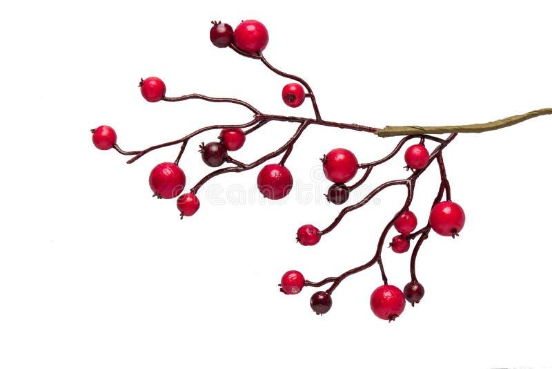 在白色背景隔绝的红色莓果霍莉 皇族释放例证