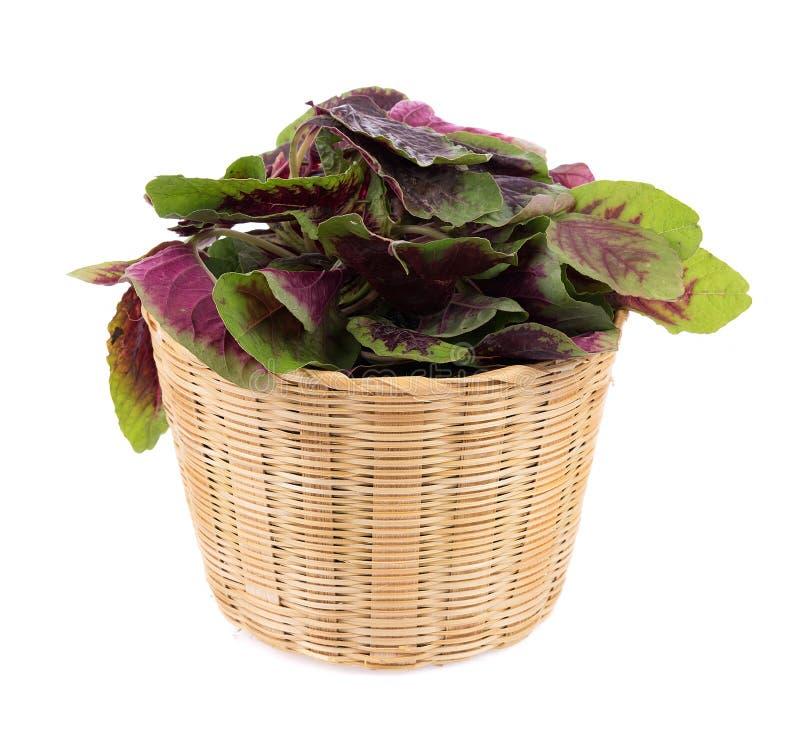 在白色背景隔绝的红色菠菜 免版税库存图片