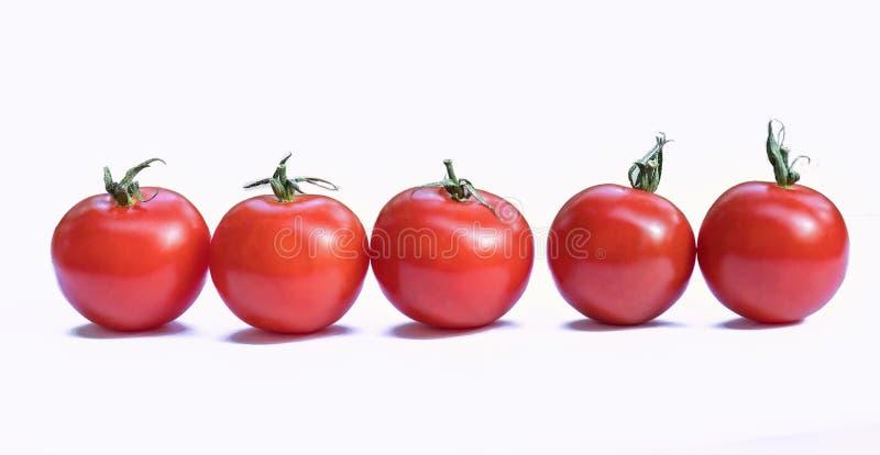在白色背景隔绝的红色西红柿 库存照片