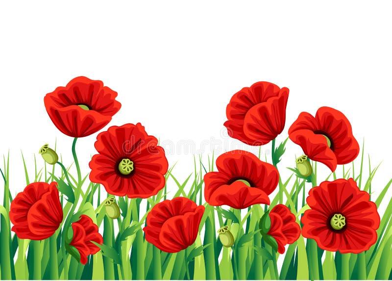 在白色背景隔绝的红色鸦片花 传染媒介红色浪漫鸦片花和草 红色的鸦片 开花红色 华丽流程 库存例证