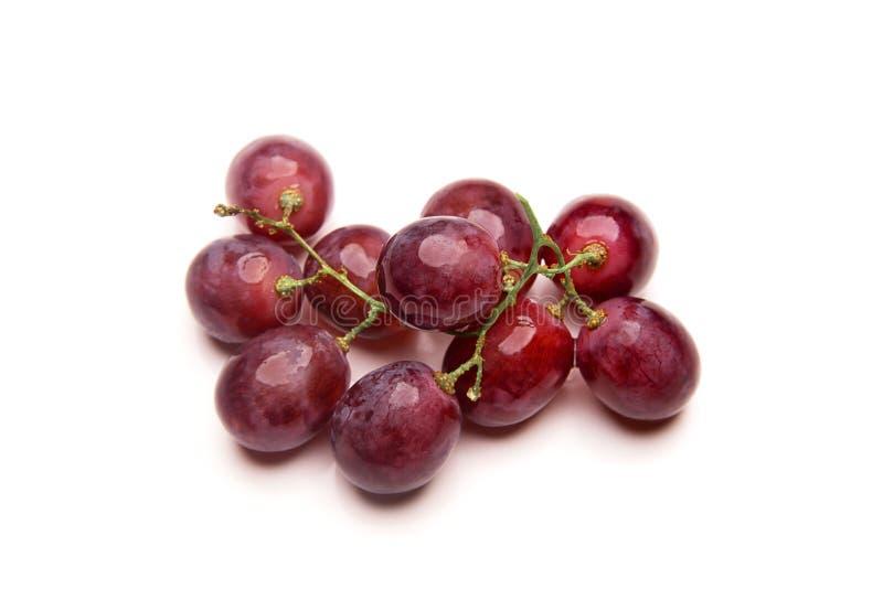 在白色背景隔绝的红葡萄分支  免版税图库摄影