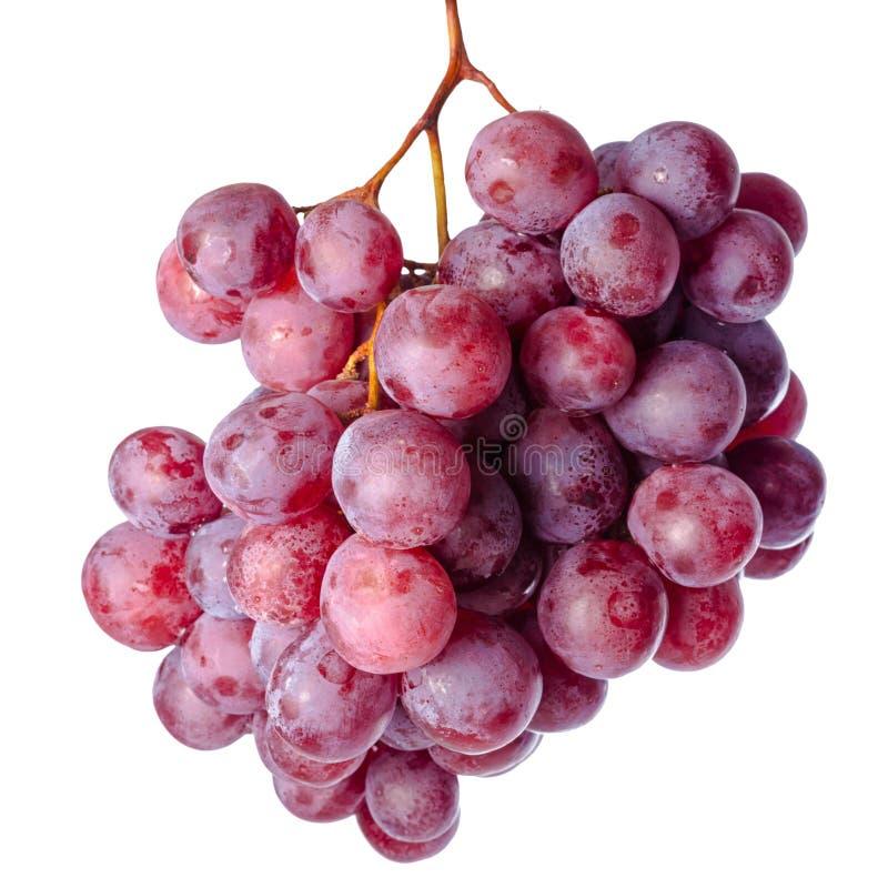 在白色背景隔绝的红葡萄的枝杈 免版税库存图片