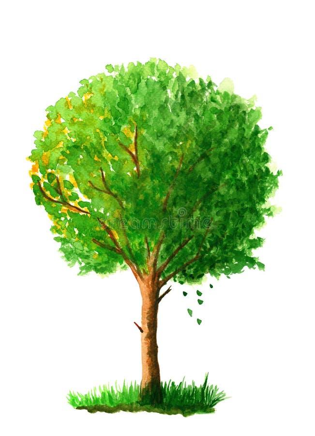 在白色背景隔绝的绿色庭院树 额嘴装饰飞行例证图象其纸部分燕子水彩 皇族释放例证
