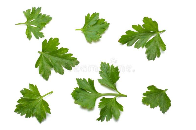 在白色背景隔绝的绿色新鲜的荷兰芹叶子 库存照片