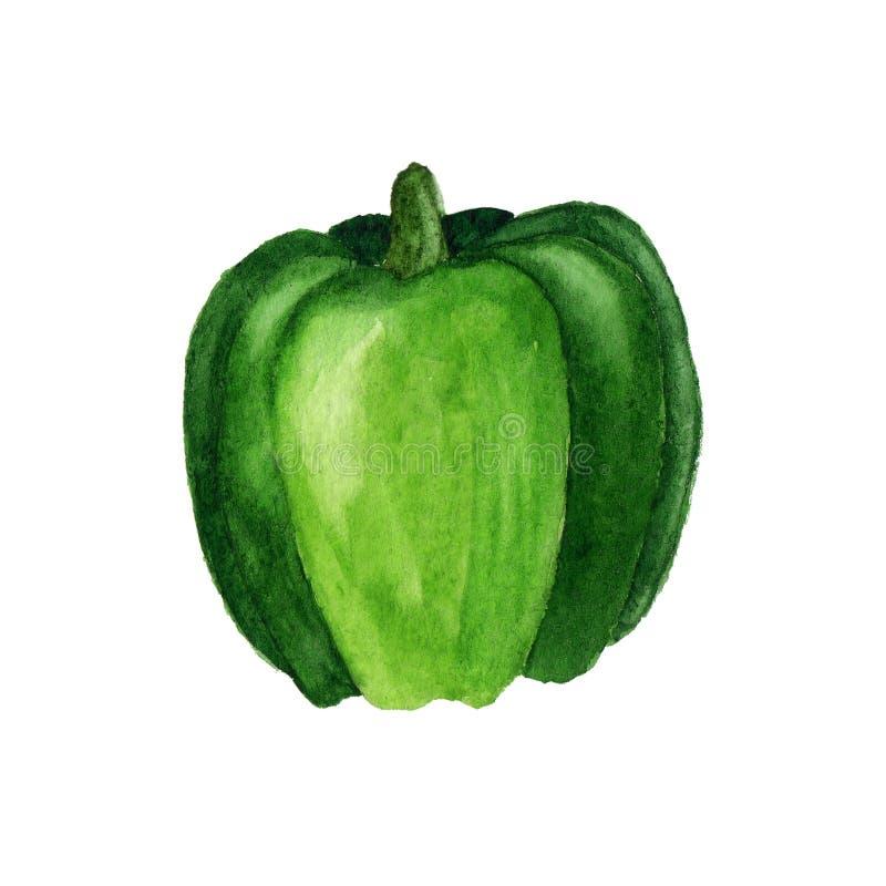 在白色背景隔绝的绿色甜椒水彩例证 库存图片