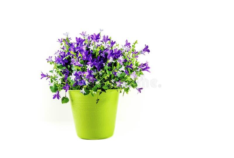 在白色背景隔绝的绿色花瓶的植物布置- 库存照片