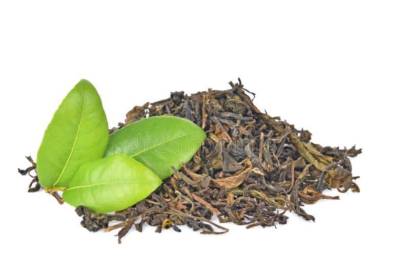 在白色背景隔绝的绿色茶叶 免版税库存照片