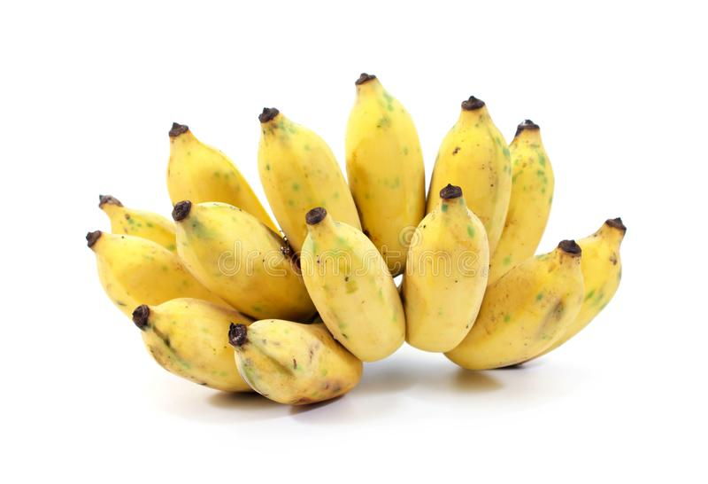 在白色背景隔绝的耕种的香蕉 被隔绝的成熟耕种的香蕉 被隔绝的黄色耕种的香蕉 库存图片