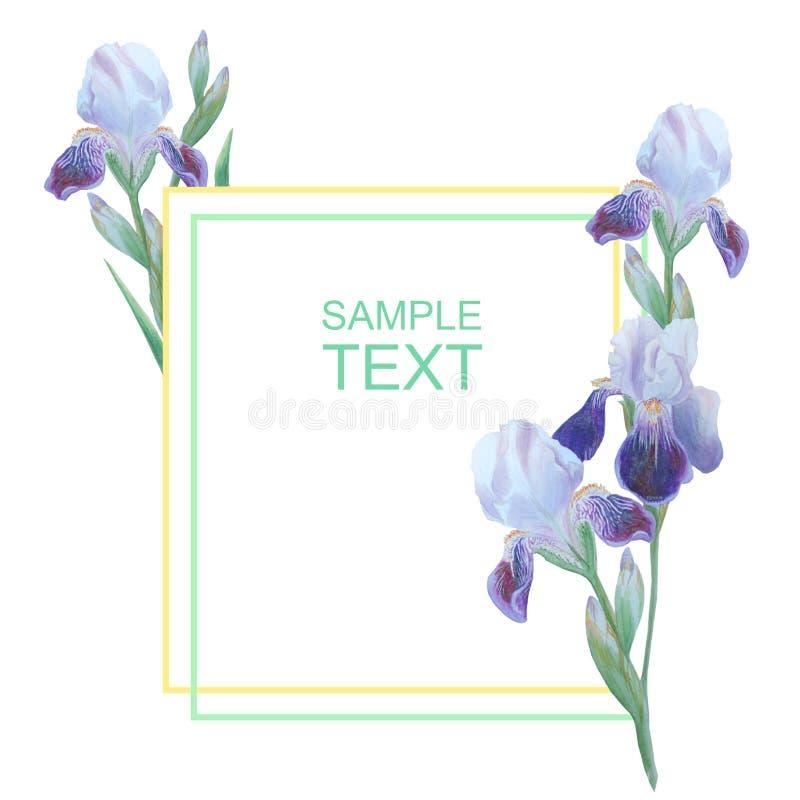 在白色背景隔绝的虹膜 您的邀请和祝贺的植物的例证 向量例证