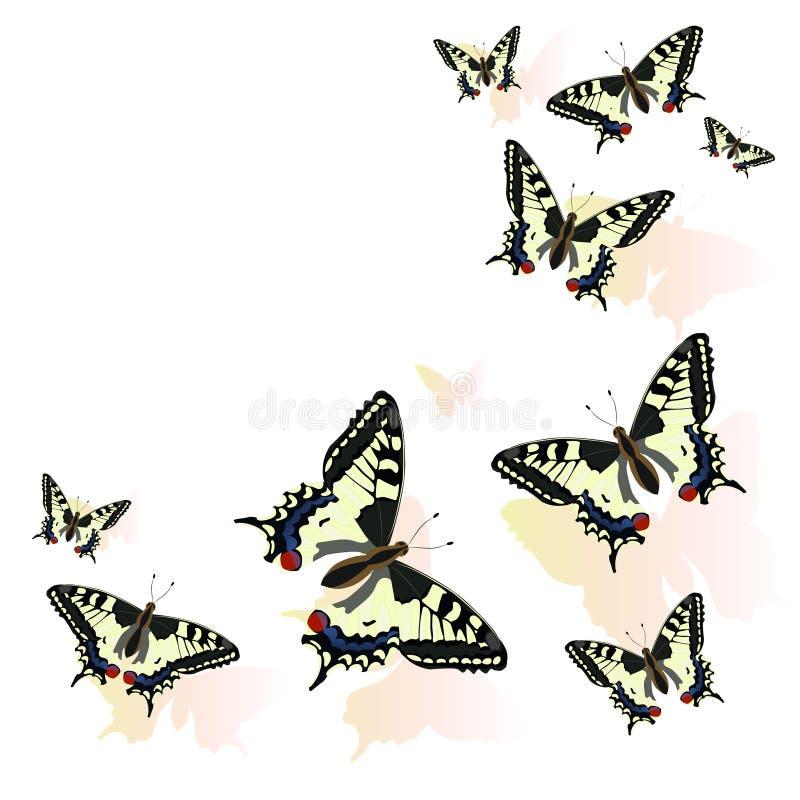 在白色背景隔绝的蝴蝶框架 Machaon传染媒介例证 库存例证