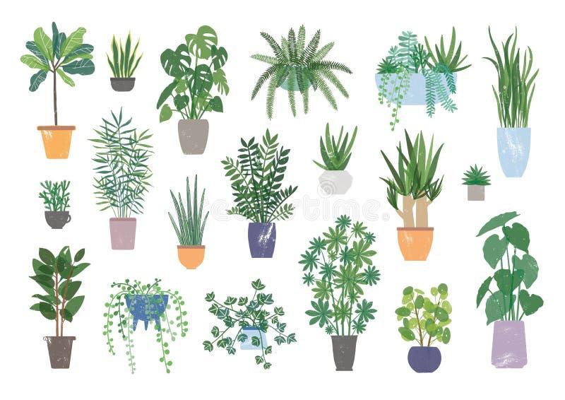 在白色背景隔绝的装饰室内植物的汇集 生长在罐或大农场主的捆绑时髦植物 库存例证