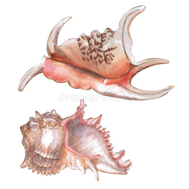 在白色背景隔绝的设置不同的五颜六色的贝壳 在海洋题材的美好的水彩例证 皇族释放例证