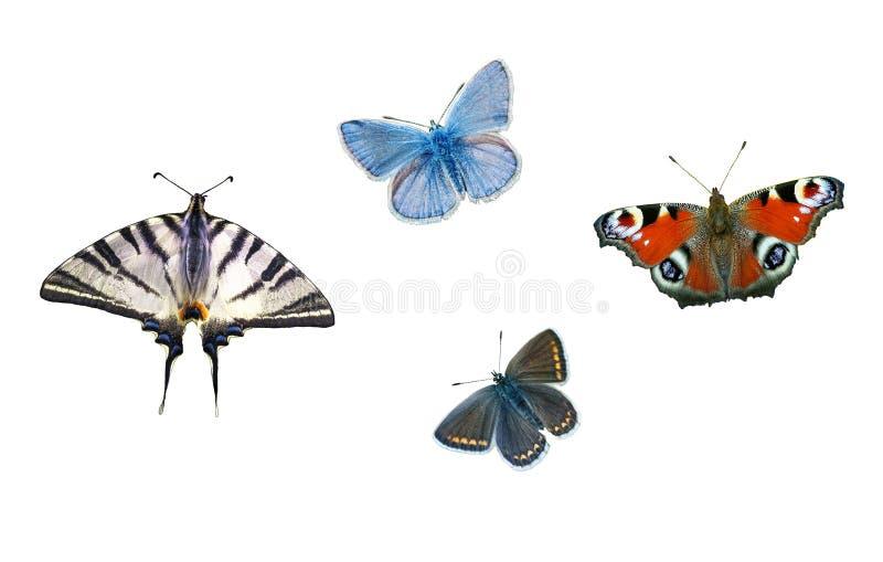 在白色背景隔绝的设置五颜六色的蝴蝶 免版税库存照片