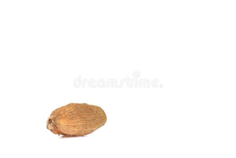在白色背景隔绝的豆蔻果实一颗种子 r 免版税图库摄影
