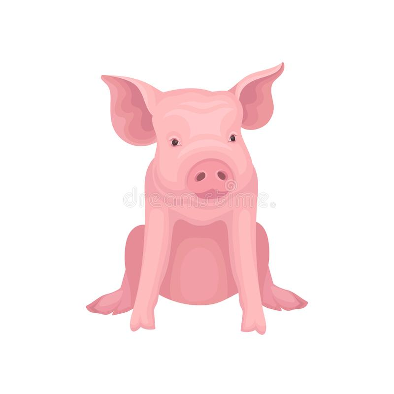 在白色背景隔绝的逗人喜爱的一点猪开会 与桃红色皮肤,扁鼻子和大耳朵的牲口 10个背景设计eps技术向量 库存例证