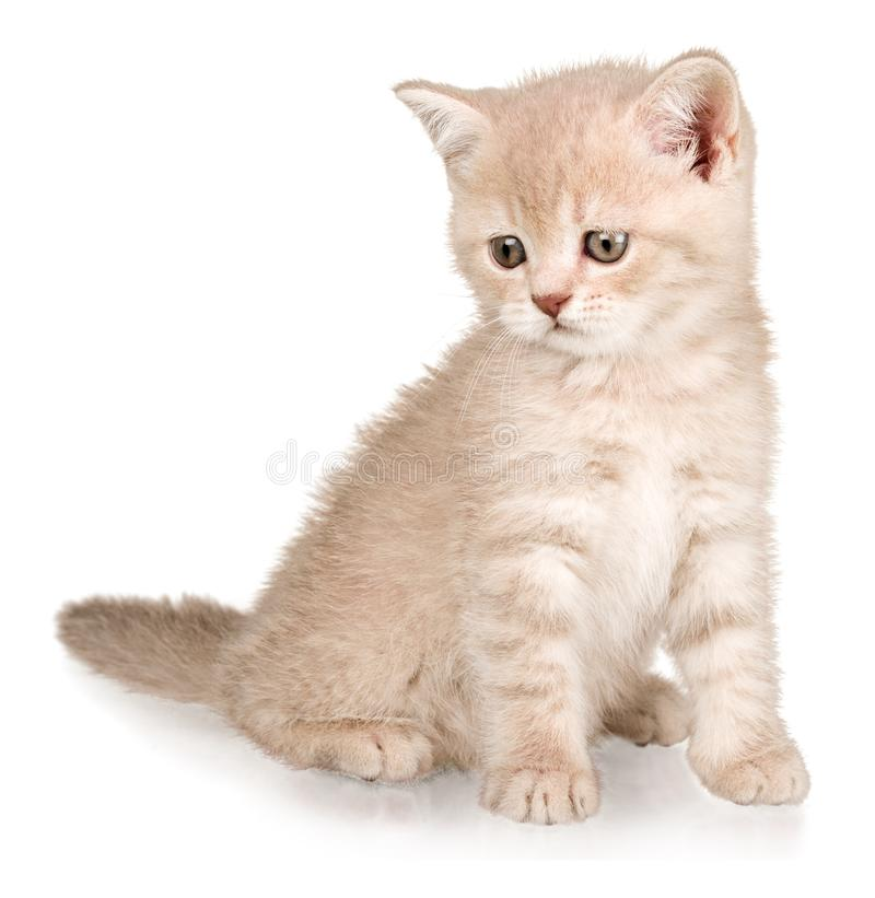在白色背景隔绝的逗人喜爱的小小猫 免版税库存照片