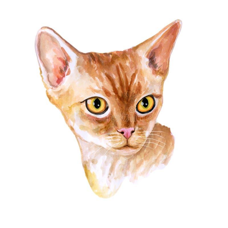 在白色背景隔绝的逗人喜爱的红色德文郡雷克斯短发品种猫画象的水彩关闭  英国波浪外套长卷毛狗 向量例证