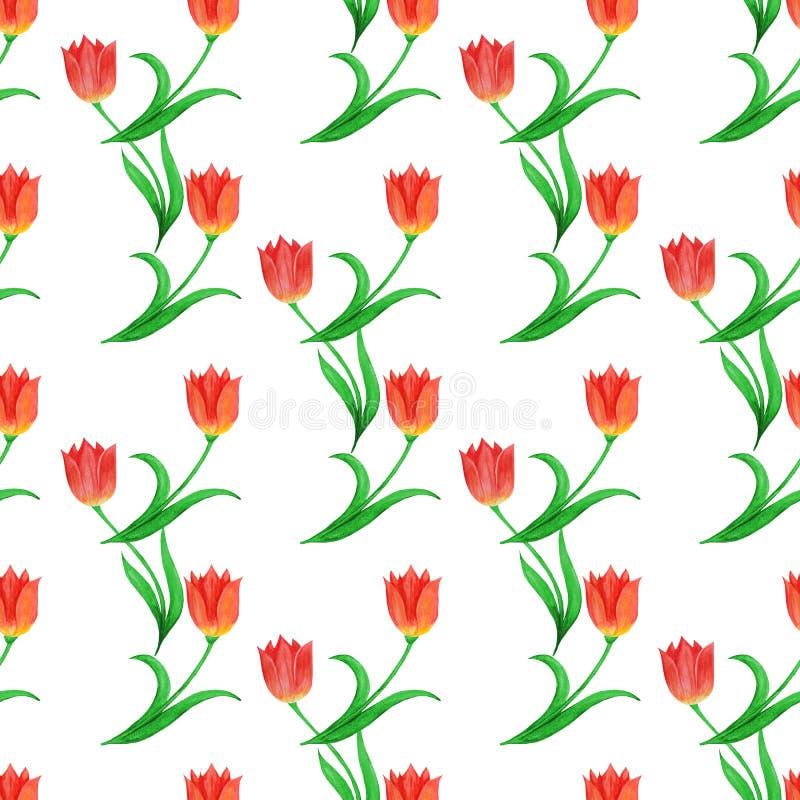 在白色背景隔绝的郁金香的简单的无缝的样式 植物捆绑 向量例证