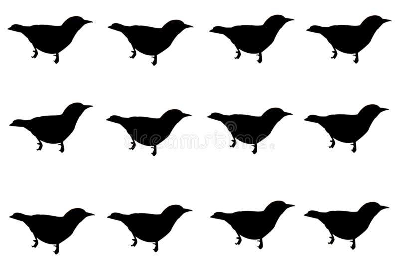 在白色背景隔绝的集合黑鸟 向量例证
