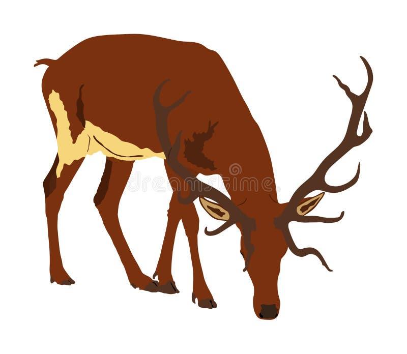 在白色背景隔绝的鹿例证 驯鹿、骄傲的高尚的鹿男性在森林里或动物园 r 向量例证