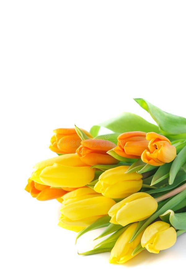 在白色背景隔绝的黄色和橙色郁金香花束  免版税库存图片