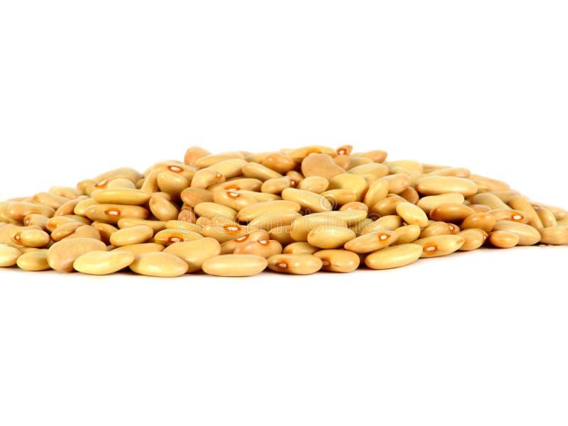 在白色背景隔绝的黄色扁豆 免版税库存照片