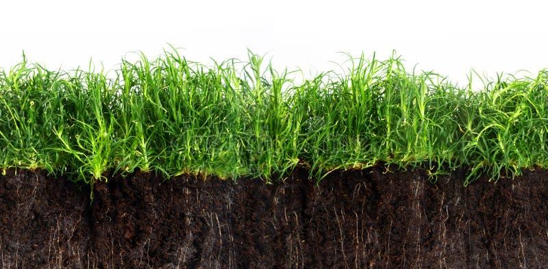 在白色背景隔绝的黑暗的土壤的, se绿草草坪 库存照片