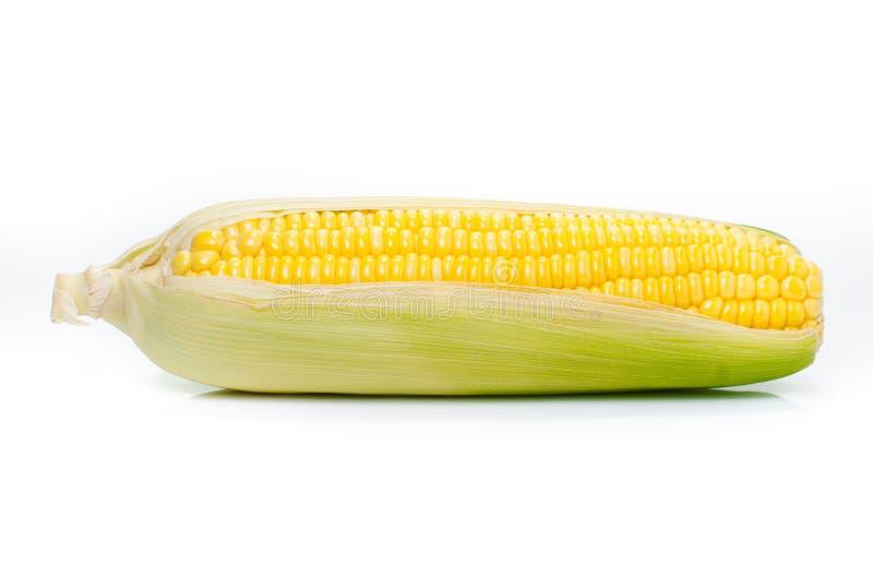 在白色背景隔绝的一个玉米穗 库存图片