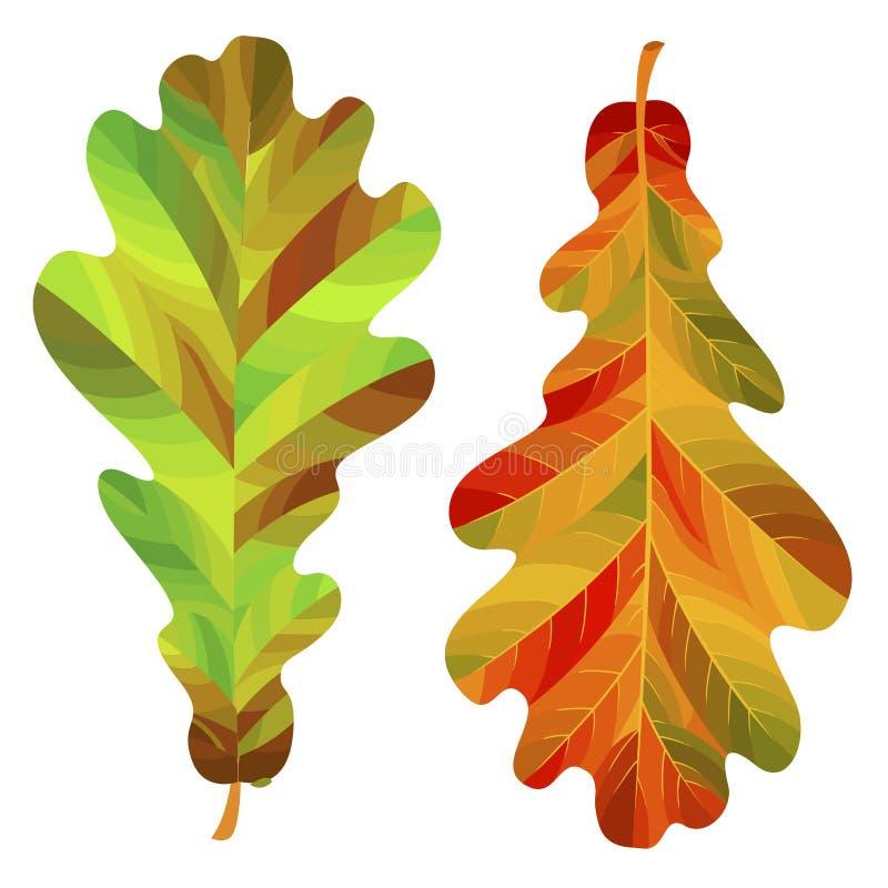 在白色背景隔绝的两片秋天橡木叶子 也corel凹道例证向量 库存例证