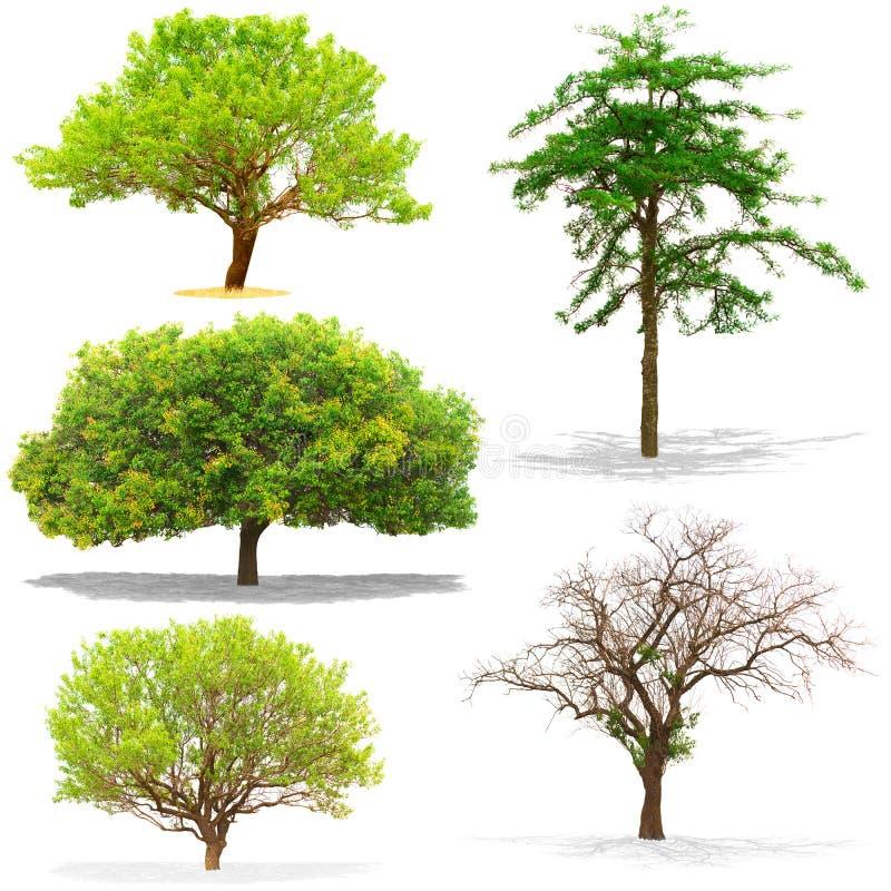 在白色背景隔绝的五棵树 免版税库存图片