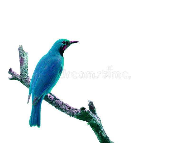 在白色背景隔绝的五颜六色的鸟 免版税库存图片