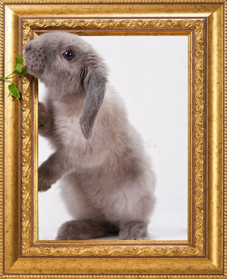 在白色背景隔绝的可爱的兔子 库存照片