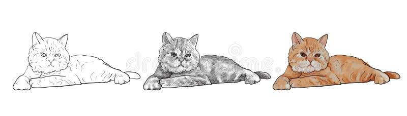 在白色背景隔绝的可爱的说谎的波斯猫 向量例证