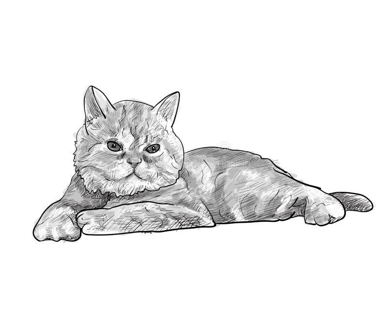 在白色背景隔绝的可爱的说谎的波斯猫 库存例证