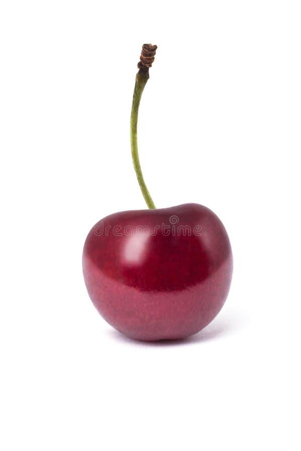 在白色背景隔绝的唯一樱桃 库存照片