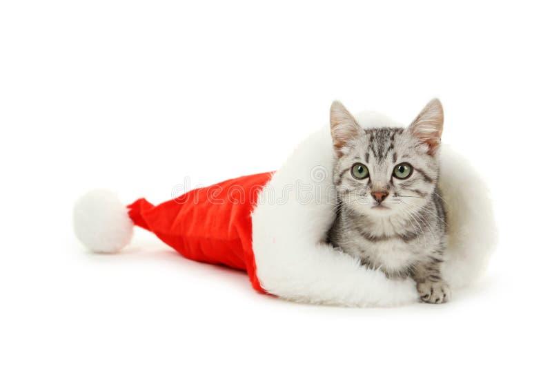 在白色背景隔绝的圣诞节帽子的美丽的猫 库存图片
