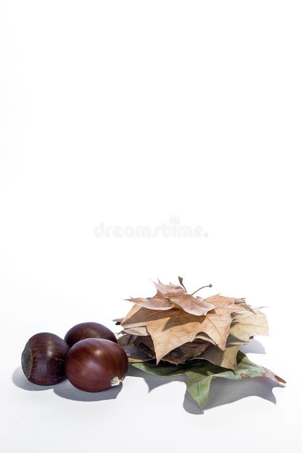 在白色背景隔绝的坚果混合 库存图片