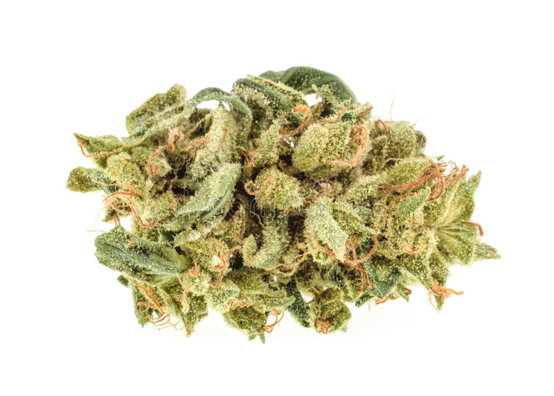 在白色背景隔绝的大麻芽 库存图片