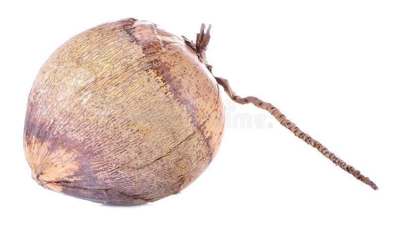 在白色背景隔绝的干椰子 免版税图库摄影