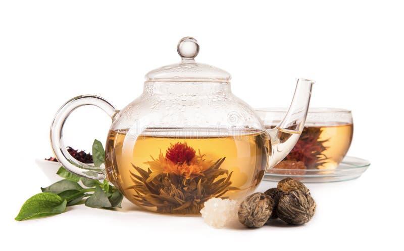 在白色背景隔绝的开花的茶 库存图片