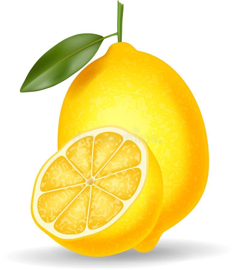 在白色背景隔绝的新鲜的柠檬 向量例证