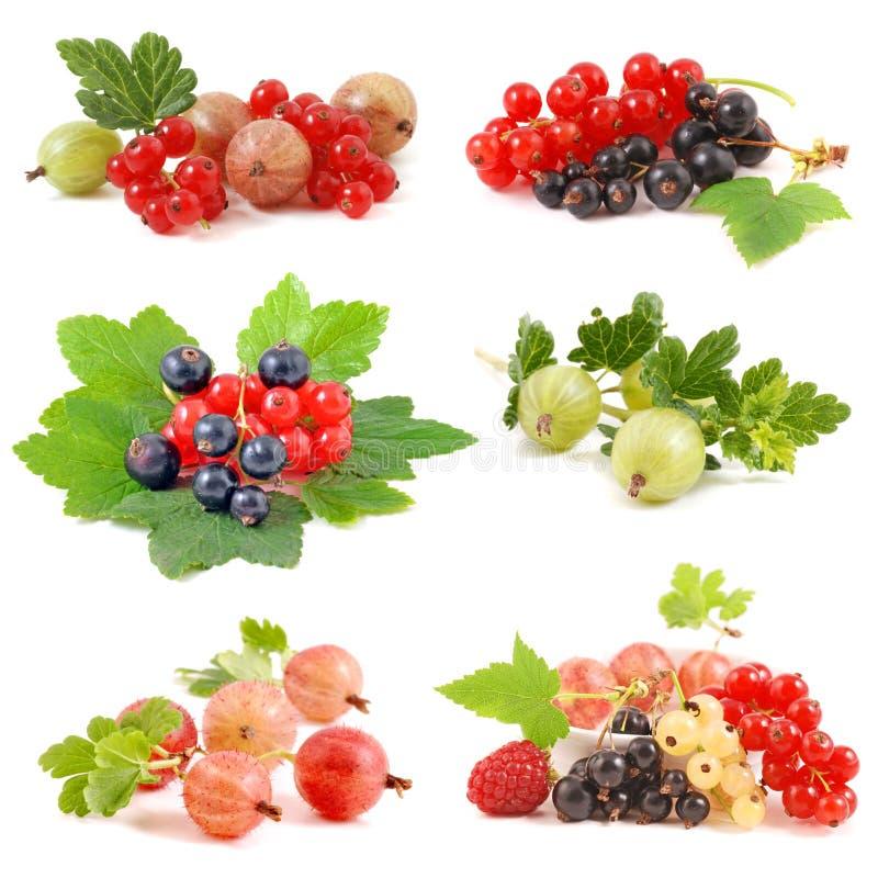 无核小葡萄干和鹅莓 免版税库存图片