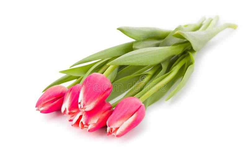 在白色背景隔绝的春天花红色桃红色郁金香花束 Brot 顶视图 库存图片