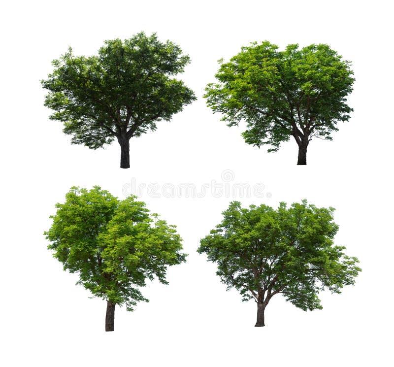在白色背景隔绝的树的汇集 免版税库存图片
