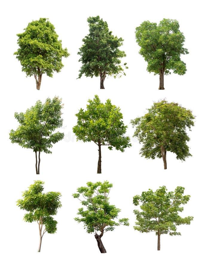 在白色背景隔绝的树的汇集 免版税库存照片