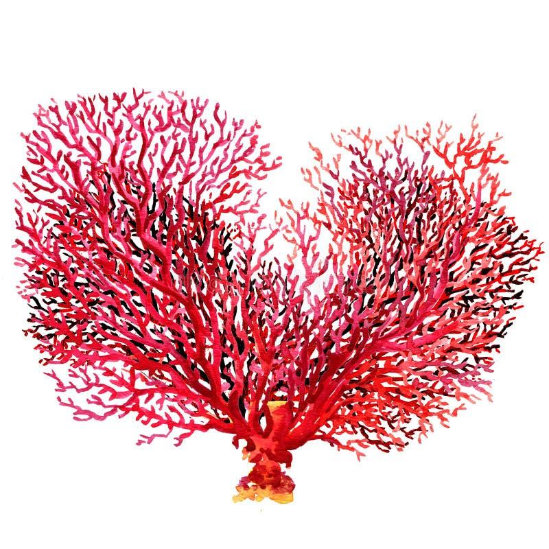 在白色背景隔绝的桃红色珊瑚 皇族释放例证