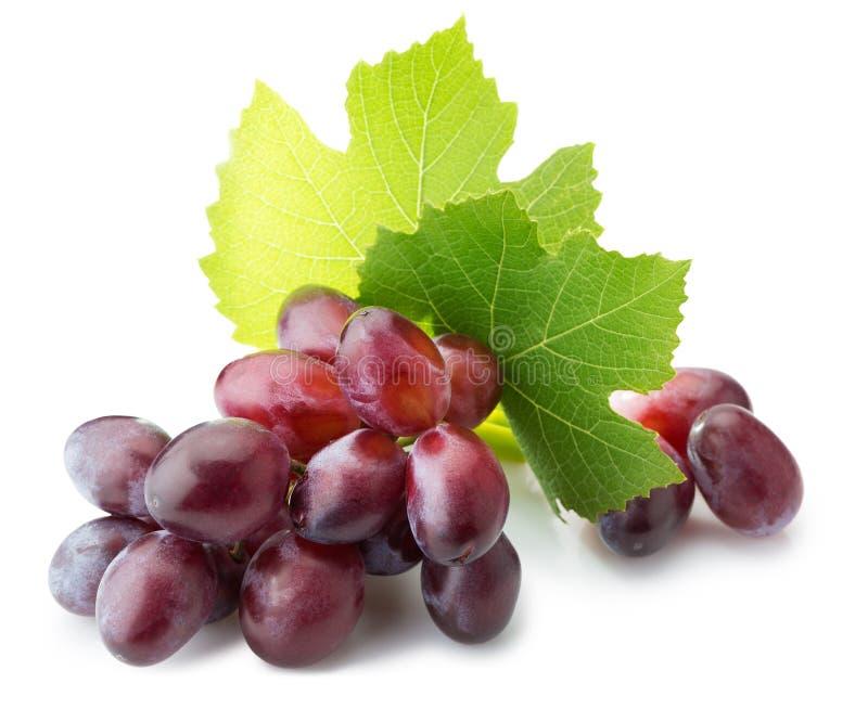 在白色背景隔绝的桃红色葡萄 免版税库存照片
